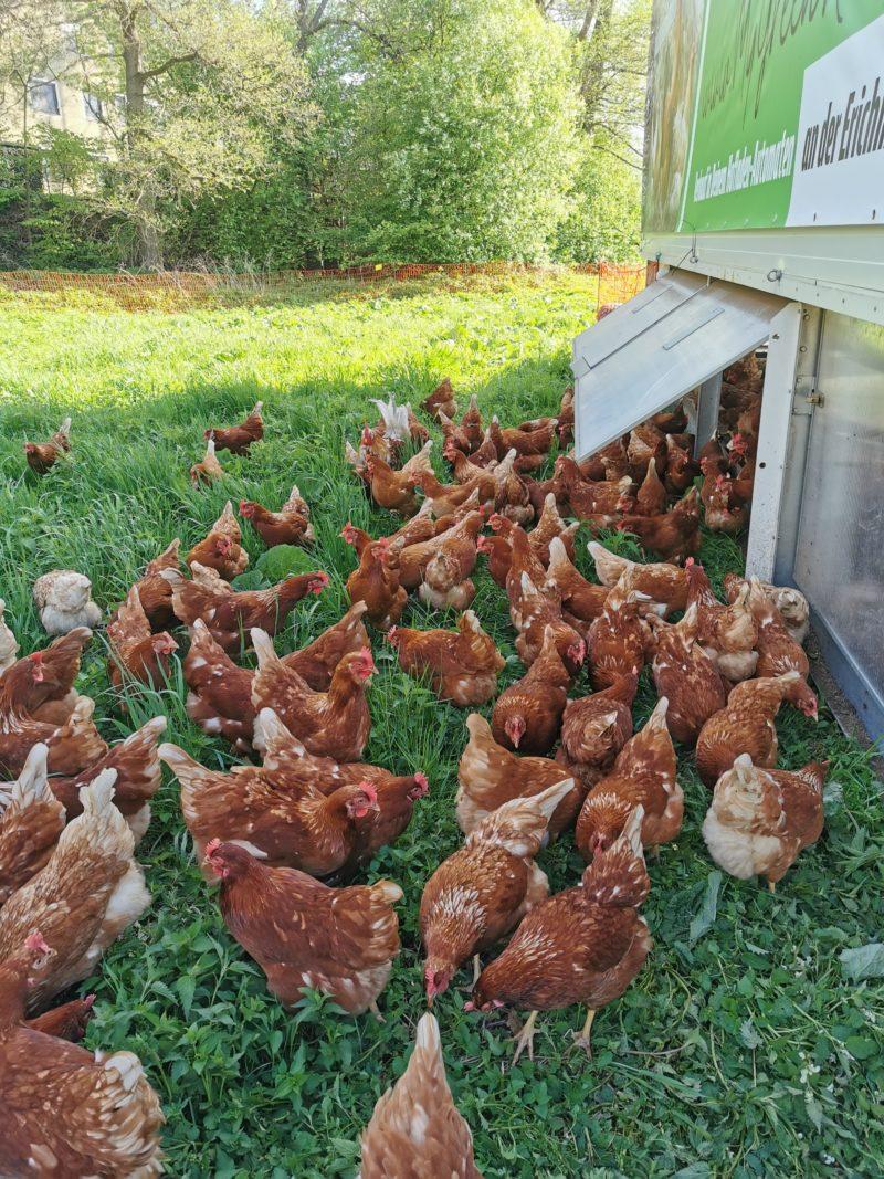 Hühnereier aus Freilandhaltung